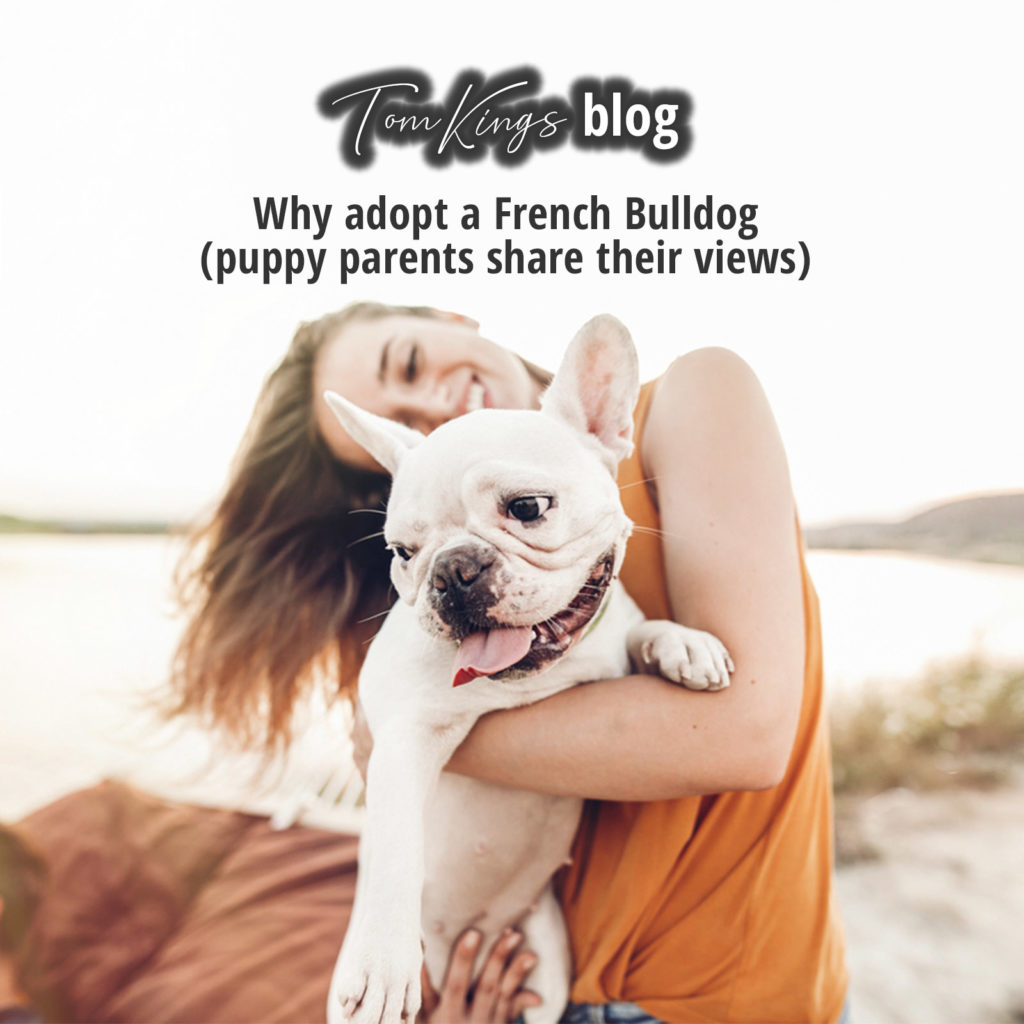 Why adopt a Frenchie, French Bulldog