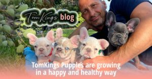 TomKings Puppies are growing - in a happy and healthy way - TomKings Blog