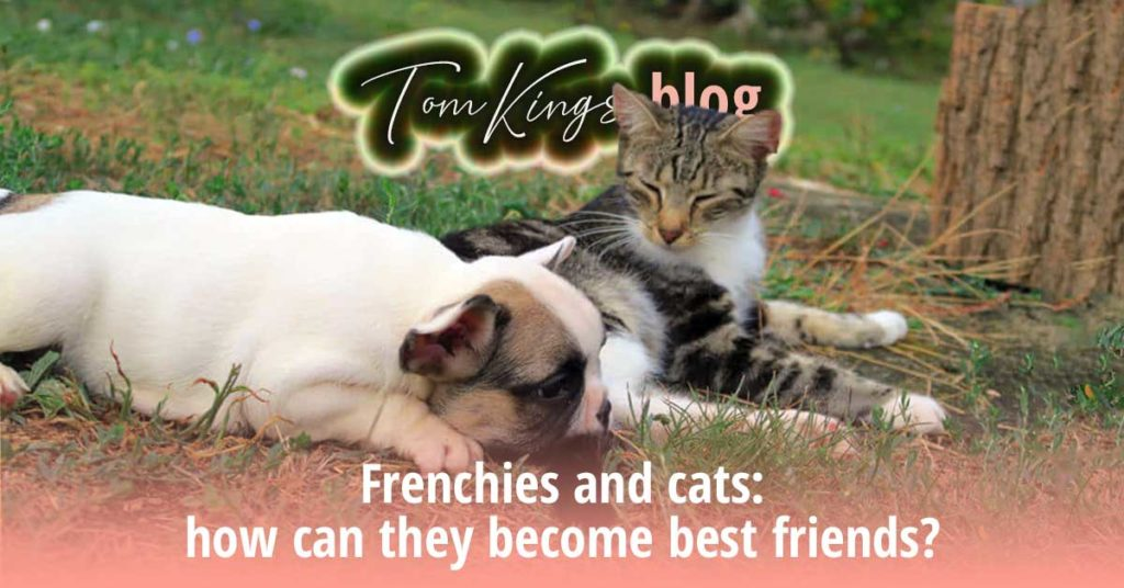 Frenchies and cats: how can they become best friends? - TomKings Blog