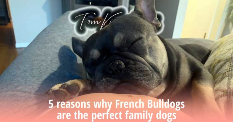5 reasons why French Bulldogs are the perfect family dogs - TomKings Blog