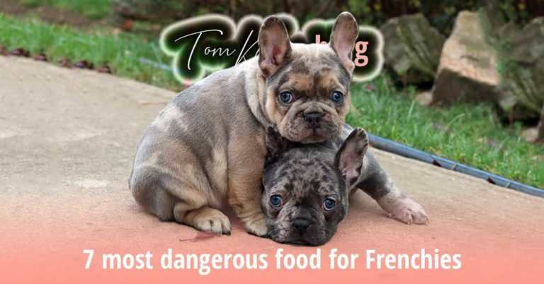 7 most dangerous food for Frenchies - TomKings Blog