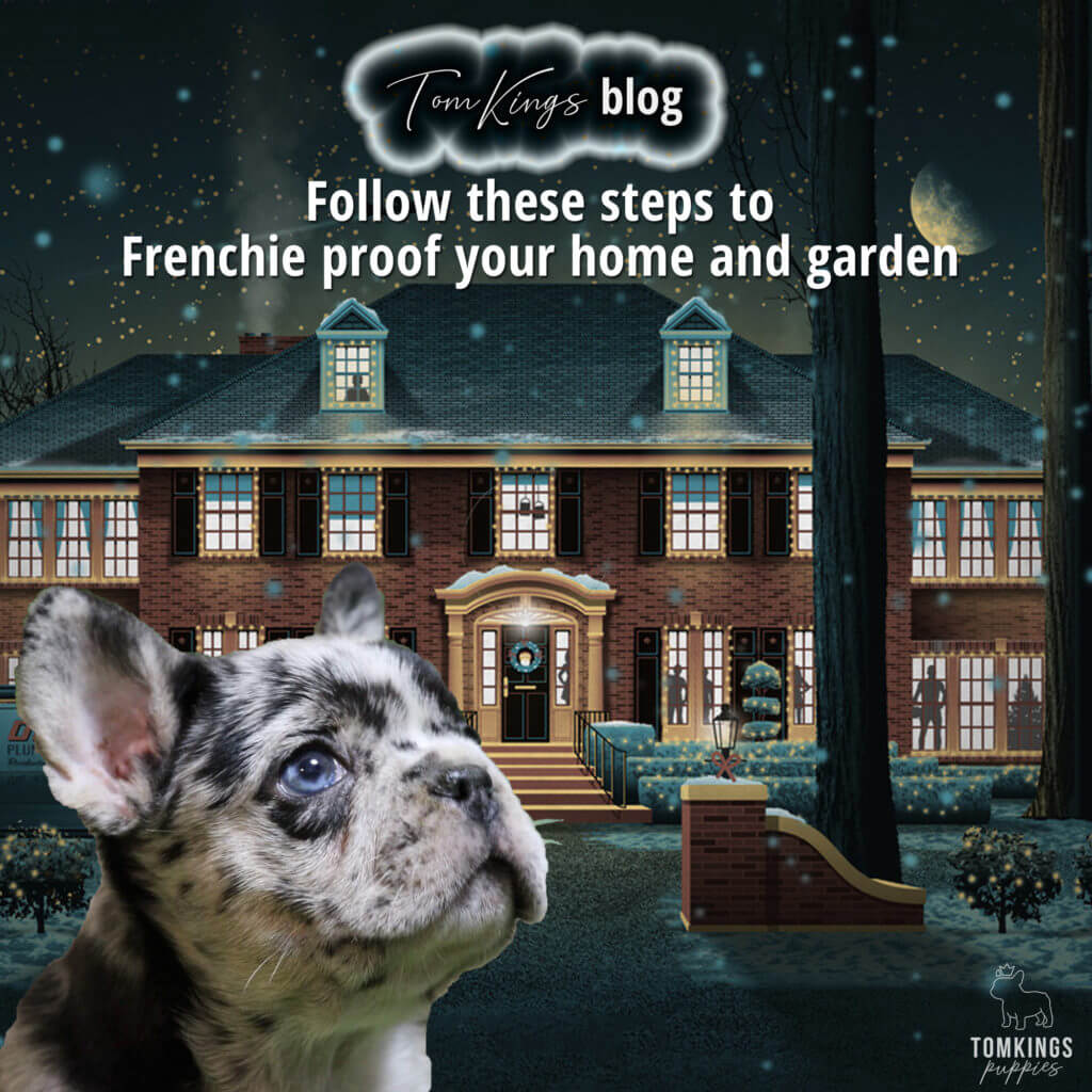 TomKings Blog Follow these steps to Frenchie proof your home and garden